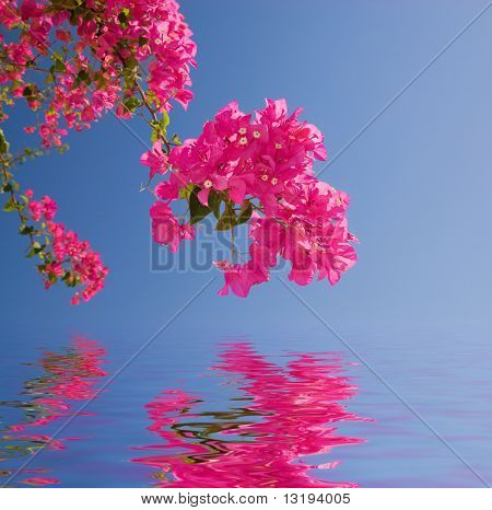 Beautiful pink flowers reflected in rendered water