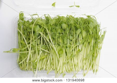 Pea sprouts inside plastic container on isolated white background