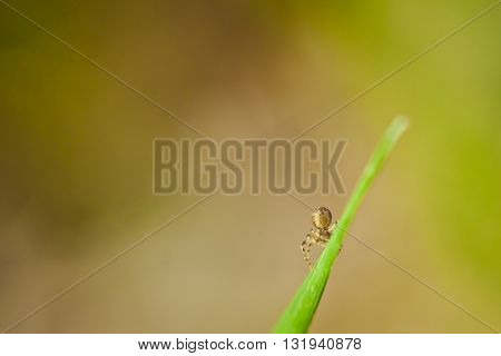 Macro photography of little spider on a grass