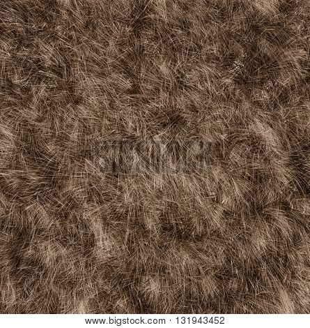 The texture of fur bear - close-up. Fashion element design.