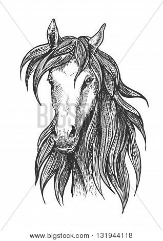 Sketched thoroughbred racehorse icon for racing and show jumping symbols design usage with slim and athletic bay stallion