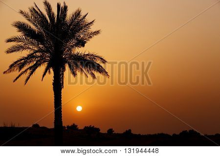 view on sunset in desert from oasis