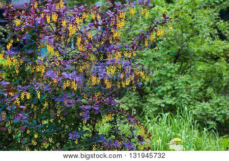 Beautiful Tree Blooms In Spring