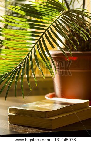 Fern and books. Two books an wooden table and branch of fern.