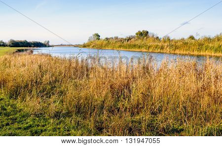 Banks of a river on a sunny day in the winter season. The reed is yellowed and very decorative in the landscape.