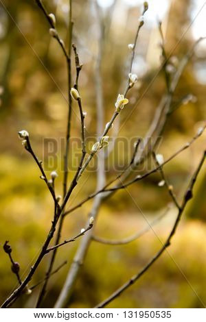 yellow, brown, reveals, the background, a branch, a young, small leaf, a yellow leaf, the wood a background, dark a branch