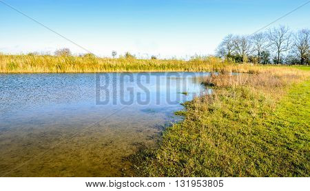 On the banks of a small lake in the autumn season viewed from a low angle. The reed is yellowed and very decorative in the landscape.