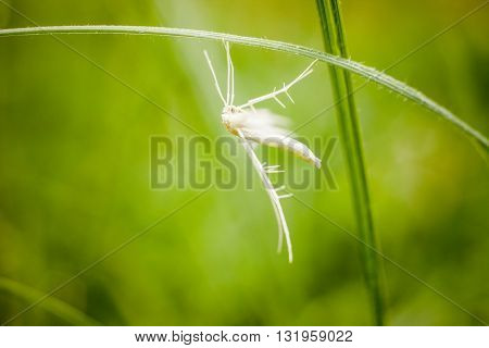 Macro photography of little insect. Nature detail