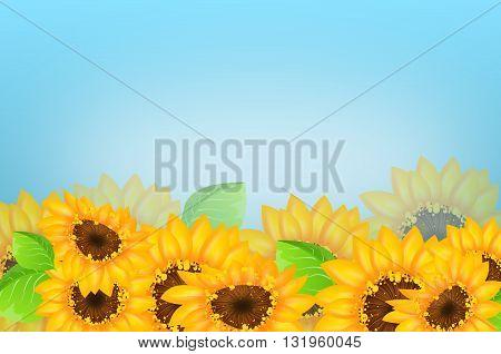 Light blue background with sunflowers decoration illustration