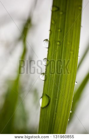 Macro photography of waterdrops in nature. Rainy detail