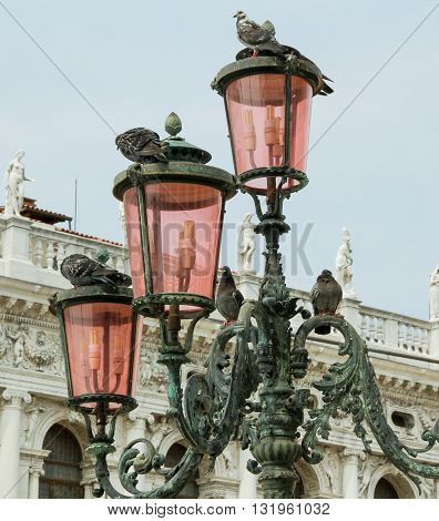 Pigeons on pink lamp posts in Saint Marks Square Venice Italy