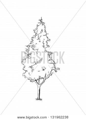 Black thuja tree - retro vector illustration.