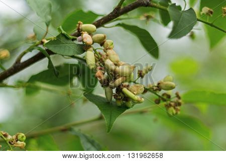 isolated natural young sprouts growing on tree
