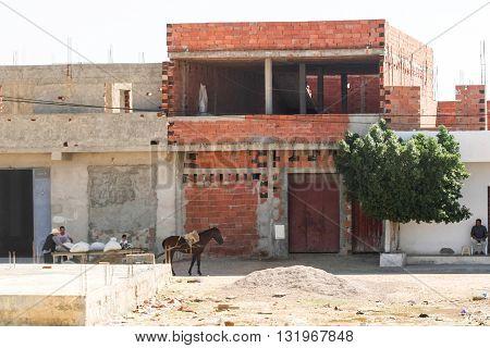 Horse Pulling Carts In Kairouan