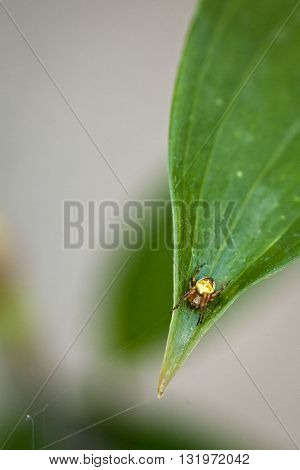 Macro photography of a little spider on a leaf
