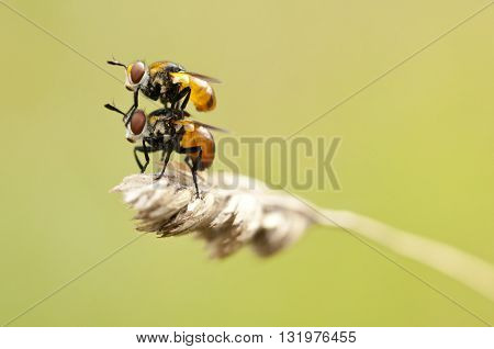Macro photography of a fly. Nature detail