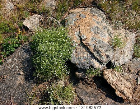 On the ground lay flat stones and grow small white flowers.