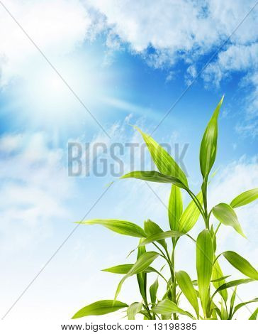 Bamboo leaves over blue sky