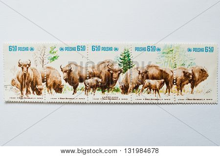 Uzhgorod, Ukraine - Circa May, 2016: Collection Of Postage Stamps Printed In Poland Shows Zubr Bull