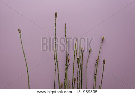 Thin stems plants againt pale purple wall