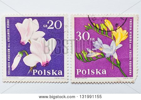 Uzhgorod, Ukraine - Circa May, 2016: Collection Of Postage Stamps Printed In Poland, Shows Orchid Fl