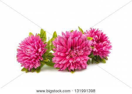 beautiful bouquet aster isolated on white background