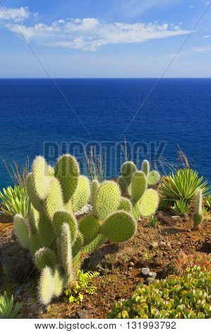 Tropical plants on southern coast of Madeira island, Portugal, Europe