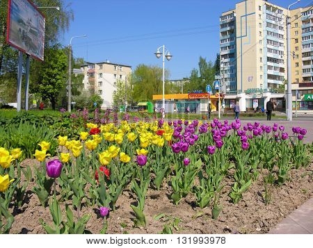 Minsk, Belarus - 9 May , 2016: City ​​street decoration - decorative flower beds , Prospect of Pushkin , Minsk