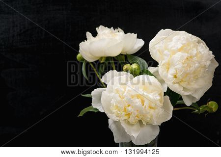 A bouquet of beautifull peonies flowers. Top view.