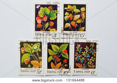 Uzhgorod, Ukraine - Circa May, 2016: Collection Of Postage Stamps Printed In Ussr, Shows Forest Berr