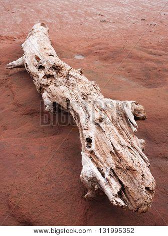Driftwood log on sandstone at low tide.