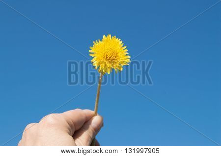 woman's hand holds a yellow dandelion against the sky.