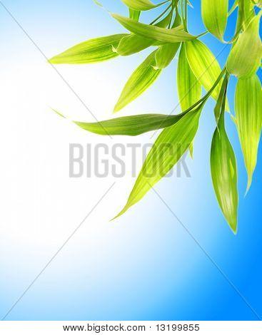 Bamboo leaves over blue sky