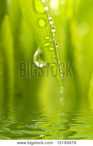 Morning dew on a green grass reflected in rendered water
