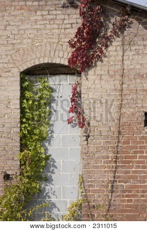 Wall And Vines
