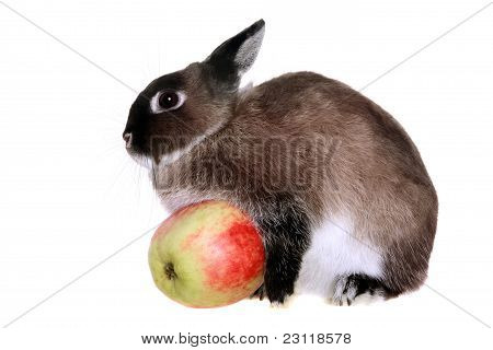 Dwarfish rabbit on the white