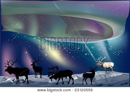 illustration with deer under aurora