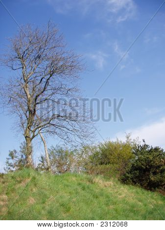 A Naked, Dead Tree On Top Of A Tiny Hill.