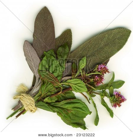 Herbs on white background isolated