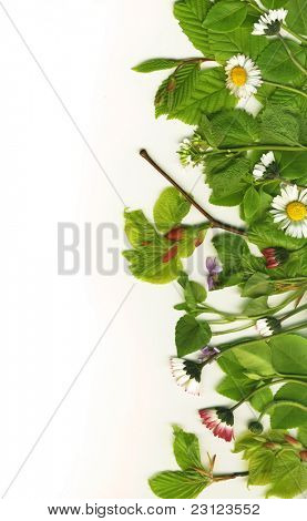 Beautiful leaves and flowers border over white background