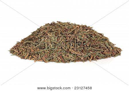Biota Herb Leaves
