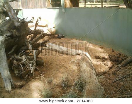 Meercat Enclosure