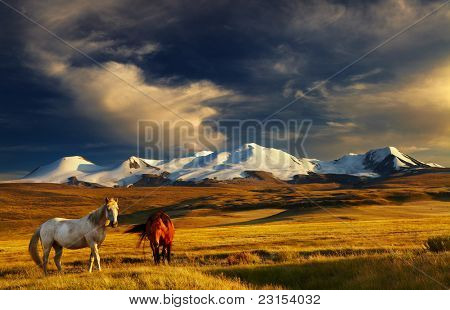 Grazing horses at sunset, plateau Ukok, the junction of Russian, Mongolian and Chinese boarders