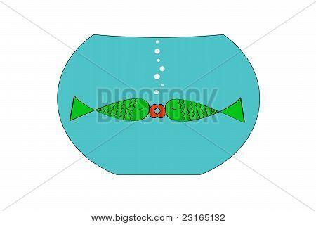Fish kissing fish