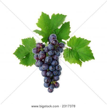 Blaue Weintraube Cluster mit Blättern
