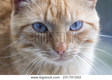 poster of Brown Cat Looking Straight To Camera, ,domestic Cat, Relaxing Cat, Emotional Eyed Cats,cat Eyes