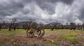 Vintage And Rustic Plow Trailer In Foreground Of Tree Orchard In Winter Under Blustery Rain Clouds. poster