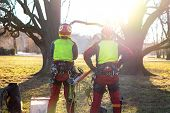 Two Arborist Men Standing Against Two Big Trees. The Worker With Helmet Working At Height On The Tre poster