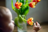 Childs Hand Reaches Out To A Bouquet Of Tulips Standing In A Vase On The Table. poster