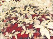Tropical Foliage Plant In Sunny Garden. Summer Foliage Vintage Pink Digital Illustration. Natural Le poster